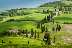 Road in Tuscany Stock Photography