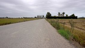 Road between two paddy fields, one harvested, the other ripe and waiting,. With a house and trees in the background, in the Ebro Delta region of Catalonia stock footage