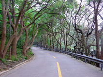 A road through two rows of trees Stock Images