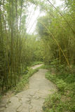 Road under bamboos forest. Straight stone road under trees in a park Royalty Free Stock Photos
