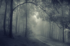 Road under branch in a dark forest with fog Stock Photos