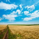 Road under cloudy sky. Rural road under cloudy sky in golden field Royalty Free Stock Photography