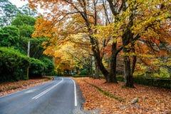 Road under golden autumn trees. Road under golden autumn trees in Dandenong Ranges, Australia stock photo