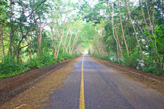 Road under green tree tunnel Stock Photography