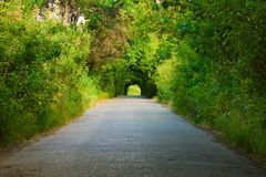 Road under green trees. View down a long road surrounded by green trees, forming an arch toward the end Stock Image