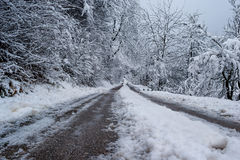 Road under the snow surounded with trees under the snow Royalty Free Stock Photos