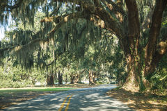 Road Under Spanish Moss Stock Photography