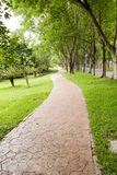 Road under trees. Straight stone road under trees in a park Stock Photos