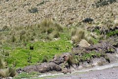 Road on the side of a mountain in the Antisana Ecological Reserve, Ecuador Stock Photography