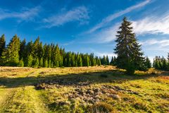 Road uphill into the spruce forest. Beautiful landscape in mountains. sunny and warm october morning Stock Photo