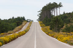 Road upper hill trough woods. On Portugal Stock Images
