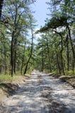 Road van Barrens van de pijnboom Stock Foto