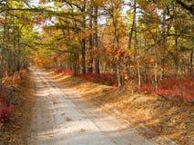 Road van Barrens van de pijnboom Stock Fotografie