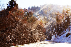 Road view in winter sunny day Royalty Free Stock Photo