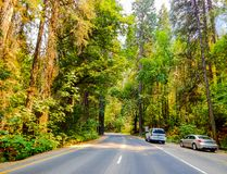 Road View of Yosemite Valley With Cars. A great shot of a Road View in Yosemite National Park stock photo