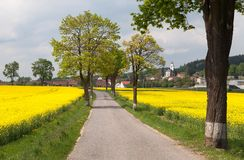 Road with village , lime trees and rapeseed field Stock Image