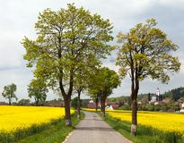 Road with village , lime trees and rapeseed field Royalty Free Stock Photo