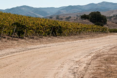 Road by Vineyard Stock Images