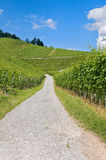 Road through vineyard Royalty Free Stock Image