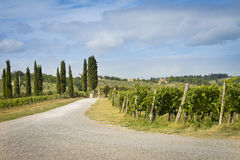 Road into a vineyard farm Royalty Free Stock Photography