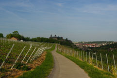 Road with Vineyard landscape view to the castle Marienberg in Wuerzburg Bavaria, Germany Stock Image