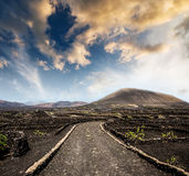 Road in vineyard in Lanzarote Stock Photography
