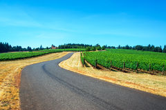 Road through a Vineyard Royalty Free Stock Photo