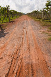Road in vineyard, Thailand Stock Photos