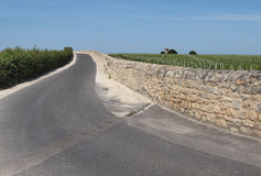 Road between the vineyards Stock Image