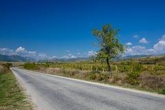 Road through vineyards Stock Image