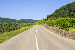 Road in the vineyards of Alsace Royalty Free Stock Images
