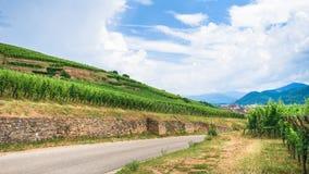 Road between vineyards in Alsace Wine Route region. Travel to France - road between green vineyards in Alsace Wine Route region in summer Stock Photos
