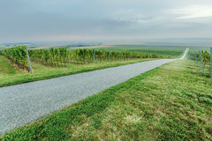 Road by the vineyards Royalty Free Stock Photos