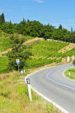 Road between Vineyards. Tuscany landscape with asphalt road and vineyards. Road between vineyards in Italy Stock Photography