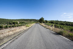 Road between Vineyards. Tuscany landscape with asphalt road and vineyards. Road between vineyards in Italy Stock Photo