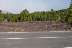Road through Volcanic Landscape. Road through Teide Nationalpark - bright daylight Stock Photography