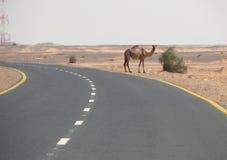 The road between Wadi Halfa and Khartoum. Royalty Free Stock Images