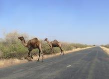 The road between Wadi Halfa and Khartoum. Stock Photos