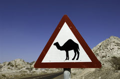 Road warning sign for camels in dubai Royalty Free Stock Photo