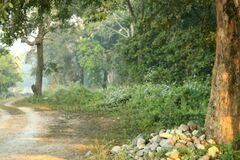 Road from the watchtower, Chilapata Royalty Free Stock Images