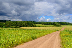 Road in weak corn fields in Siberian countryside with short summer Royalty Free Stock Photo
