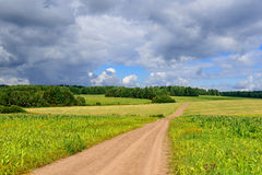 Road in weak corn fields in Siberian countryside with short summer Stock Photo