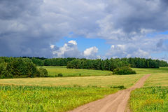 Road in weak corn filds in Siberian countryside with short summer Stock Images