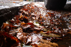 Road with wet leaves Stock Photo