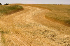 Road through wheat. The road through ripe wheat Royalty Free Stock Photography