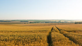 Road in wheat field Royalty Free Stock Photography