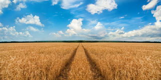 Road through wheat field Royalty Free Stock Photos