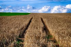 Road in the wheat field  and blue sky with clouds. Rural nature. Countryside landscape. Royalty Free Stock Images