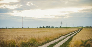 Road in a wheat field Royalty Free Stock Photos