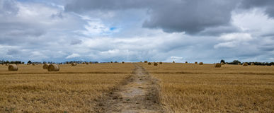 Road through wheat field. A footpath going through a wheat field Royalty Free Stock Image